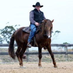 Ian Leighton Horsemanship